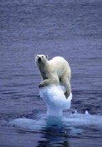 Degelo Polar